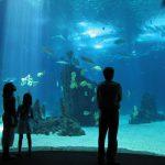 Oceanario di Lisbona: un piccolo grande mondo acquatico