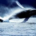 In Norvegia alla scoperta delle balene