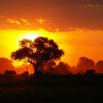Informazioni essenziali per godersi un viaggio in Africa