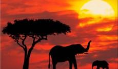 Una delle grandi ricchezza dell'Africa: i Proverbi! (Seconda Parte)