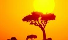 Una delle grandi ricchezza dell'Africa: i Proverbi! (Terza Parte)